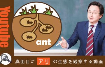 アリを飼育して生態を観察:Youtubeで見つけた面白動画